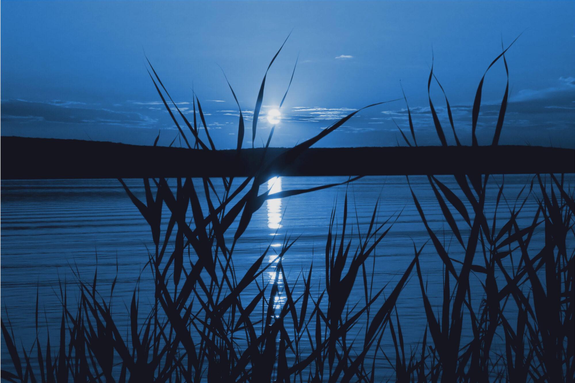 Moon shining on river through tall grass